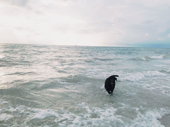 Moto Loves the Ocean | Clearwater Beach, FL /></a>