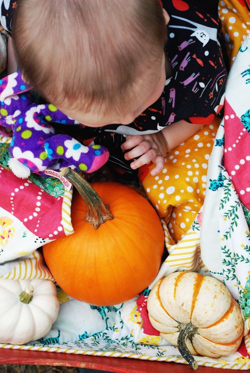 Legare Farms - Charleston, SC - Noi's first pumpkin patch
